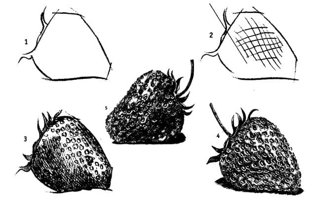 -рисунок-клубники Как нарисовать клубнику карандашом?