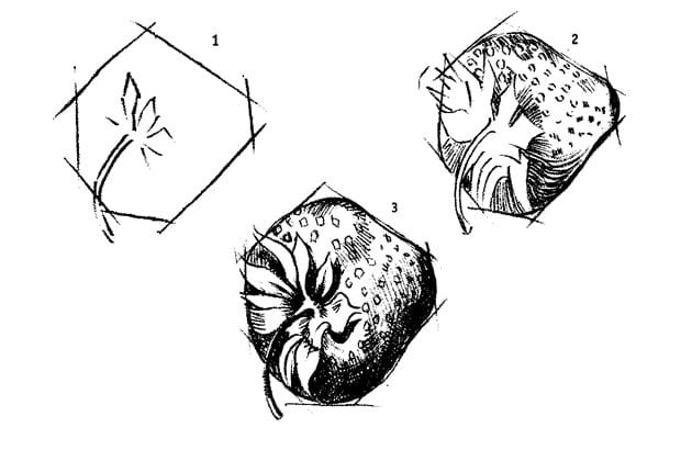 -тени-и-блики-клубники Как нарисовать клубнику карандашом?