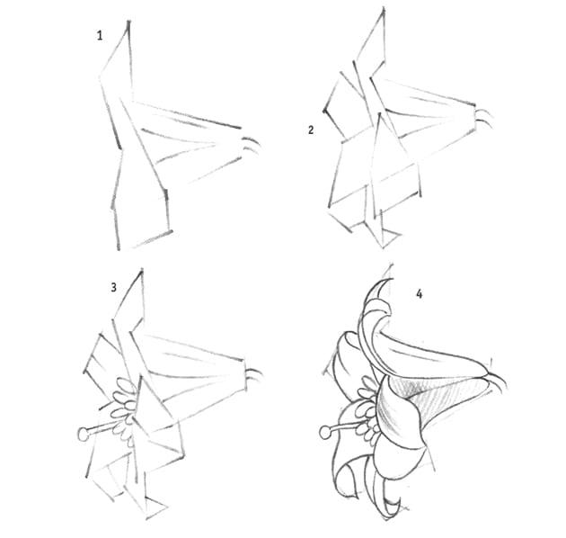 Как нарисовать лилию карандашом