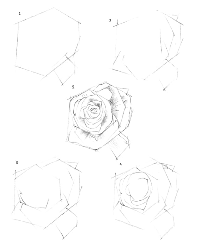Как нарисовать розу флорибунда карандашом