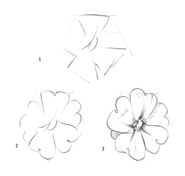 Как нарисовать примулу карандашом