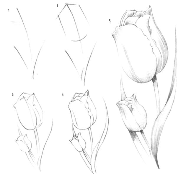 ними картинки тюльпан как нарисовать получать согласование