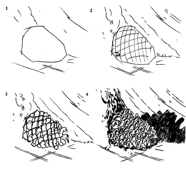 Как нарисовать сосновую шишку карандашом