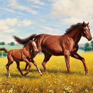 Лошади и единороги раскраски