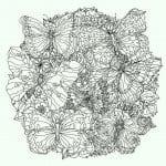 а4 раскраски бабочки бесплатно формат