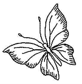 бабочка раскраска красивая