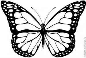бабочка распечатать а4 раскраска