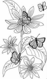 бабочки крупные раскраски