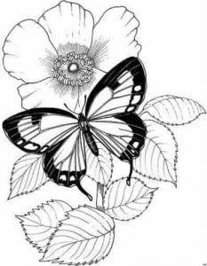 бабочки онлайн бесплатно раскраска