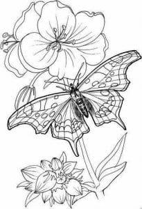 бабочки раскраски антистресс