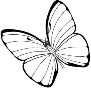 бабочки раскраски по номерам