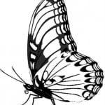 бабочки распечатать бесплатно формат а4 раскраски