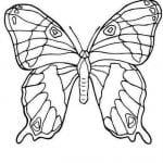 бабочки распечатать бесплатно раскраски для детей