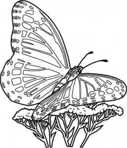 бесплатно бабочка раскраска для детей