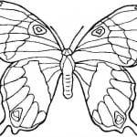 бесплатно бабочка распечатать для малышей раскраска