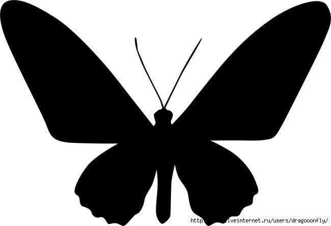 бесплатно бабочки  формат а4 раскраски