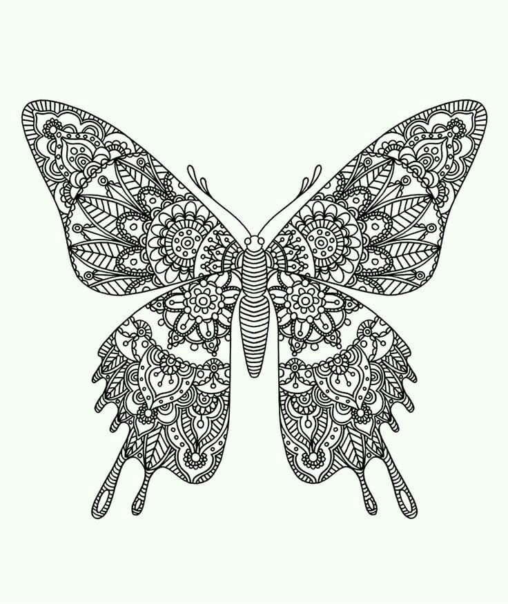 бесплатно бабочки фото раскраски