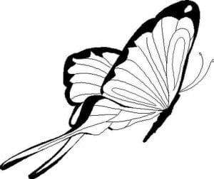 бесплатно бабочки картинки раскраски