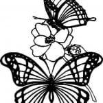 бесплатно бабочки красивые раскраски