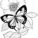 бесплатно бабочки онлайн  раскраска