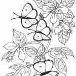 бесплатно бабочки раскраски антистресс