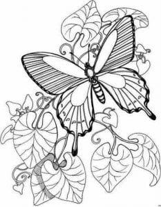 бесплатно бабочки распечатать  новые раскраски