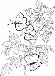 бесплатно бабочки распечатать  раскраски для детей