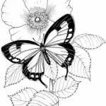 бесплатно бабочки распечатать  раскраски