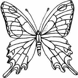 бесплатно черно белые распечатать картинки раскраски бабочки