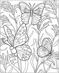 бесплатно цветная раскраска бабочка