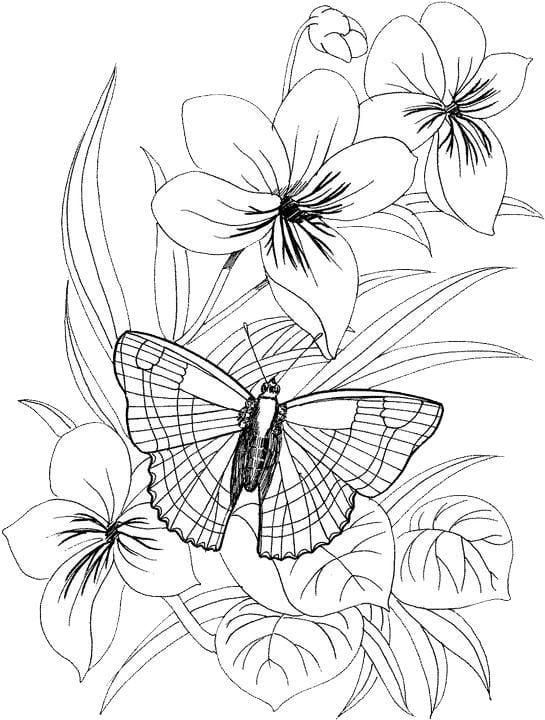 Бабочки и цветы картинки раскраски