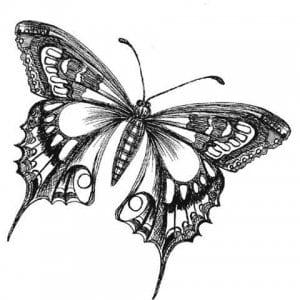 бесплатно цветы и бабочки распечатать раскраски для девочек