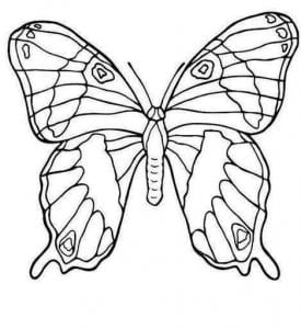 бесплатно онлайн  раскраска бабочки