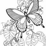 бесплатно раскраски бабочки детские