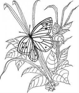 бесплатно раскраски бабочки картинки