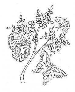 бесплатно раскраски бабочки черно белые распечатать картинки