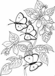 бесплатно раскраски бабочки фото