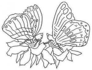 бесплатно раскраски бабочки крупные