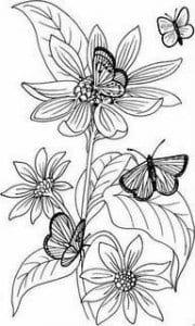 бесплатно раскраски бабочки раскрашивать
