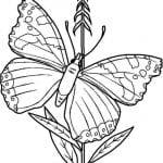 бесплатно раскраски бабочки распечатать