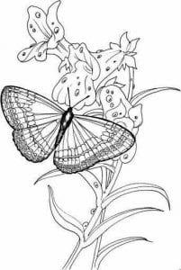 бесплатно раскраски бабочки скачать