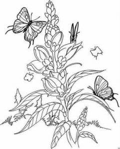 бесплатно раскраски бабочки распечатать  формат а4