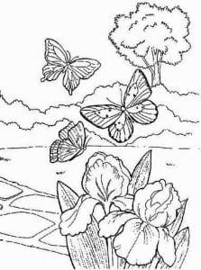 бесплатно раскраски декора бабочки