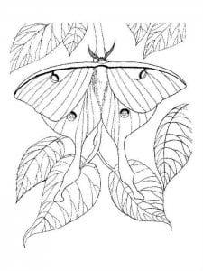 бесплатно раскраски для девочек бабочки