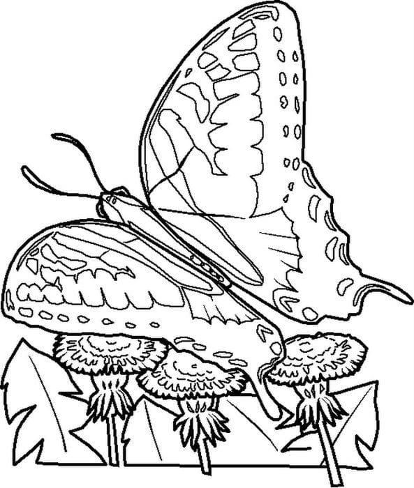 бесплатно раскраски на тему бабочки
