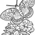 бесплатно раскраски по номерам бабочки