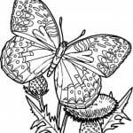 бесплатно раскраски про бабочек онлайн