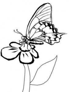 бесплатно раскраски распечатать бабочки картинки
