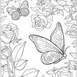 бесплатно распечатать бабочки картинки раскраски