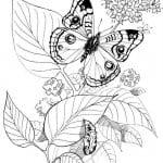 бесплатно распечатать раскраски бабочки красивые